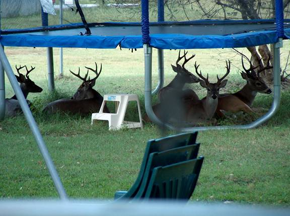 bucks_trampoline.jpg