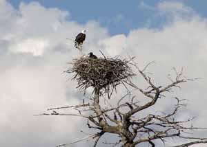 eagle-crw_3128.jpg