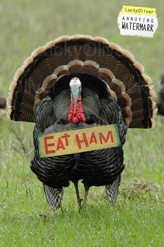turkey-ham
