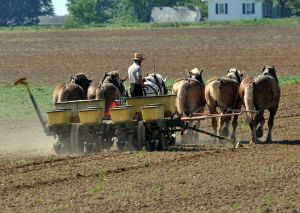 1188949_almish_working_the_farm
