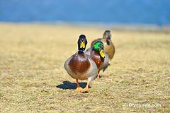 http://www.flickr.com/photos/glynlowe/8394384671/